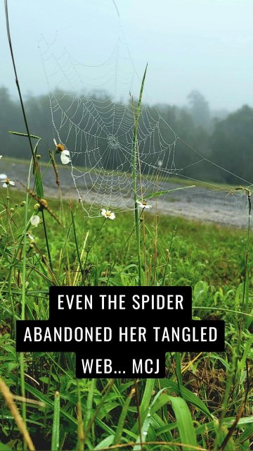 EVEN THE SPIDER ABANDONED HER TANGLED WEB... MCJ
